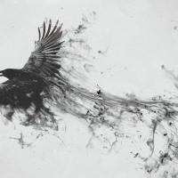 Tres poemas sobre avesSoledad Acevedo Soledad Acev…
